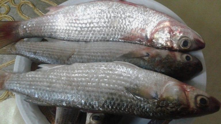 """تسمم 13 شخصا في البحيرة وسوهاج: وجبة سمك و""""يوسفي"""""""