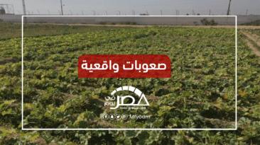 الموافقة على قانون الزراعة العضوية.. ما فرص نجاح المشروع في مصر؟
