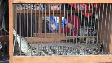 حملة على محال بيع الحيوانات الأليفة بالهرم: ضبط 20 حيوان