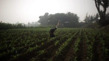 برلماني: ارتفاع أسعار الأسمدة بسبب فساد الجمعيات الزراعية
