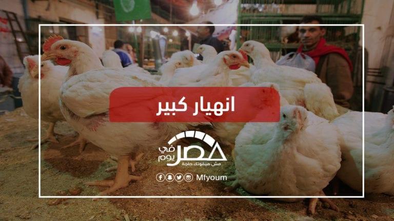 إغلاق 40% من مزارع الدواجن.. ما تأثيره على المستهلك؟