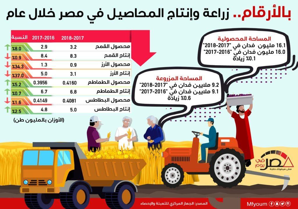 بالأرقام.. زراعة وإنتاج المحاصيل في مصر خلال عام (إنفوجراف)