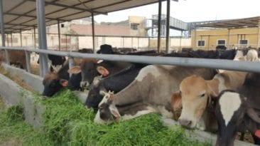 لمواجهة فيروس كورونا.. الزراعة تتخذ هذه الإجراءات